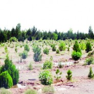 مدیر کل منابع طبیعی و آبخیزداری استان عنوان کرد  توزیع و کاشت ۱۵۰ هزار نهال در البرز